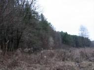 Лес где много чего можно найти