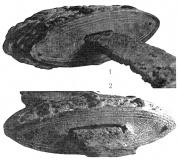 Перекрестье (1) и навершие (2). Орнамент на торцевых плоскостях.