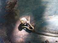 Золотая серьга - Кочевники