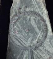 Ювелирная литейная форма с извержением змеи