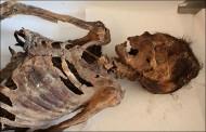 тело, найденное в Погребении на Алтае
