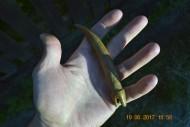 Древний клык - амулет. Резной, в виде змеи