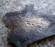 Позолота серебряной пятипальчатой фибулы