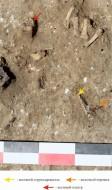 Детали кифары, найденные в погребении некрополя поселения «Волна-1»