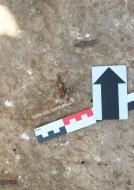 Костяной струнодержатель и железный порожек, найденные в погребении некрополя поселения «Волна-1»