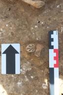 Костяной плектр из погребения в некрополе поселения «Волна-1»
