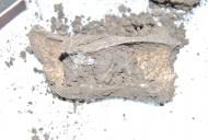 Находки костей животных у казанов скифов и сарматов