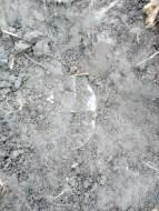 Серебряные фибули с золотыми накладками. Готы конец 4 - начало 5 века