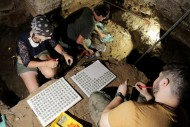 Экспертиза и очистка монет из раскопа