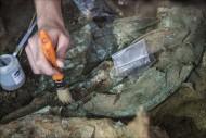 Рис. 5. Бронзовый шлем при раскопках (фотография Пьерлуиджи Джорджи)