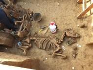 В Хорватии нашли захоронение античной колесницы с лошадьми