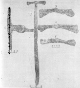 рассчет  длины лезвия топора